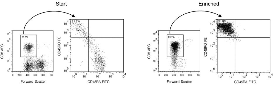 Typical EasySep™ Human Memory CD8+ T Cell Enrichment Profile