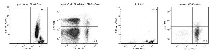 Starting with human whole blood from normal healthy donors, the typical naïve B cell (CD19+CD27-) content of the non-lysed final isolated fraction is 918 ± 36% (gated on CD45) or 824 ± 126% (not gated on CD45)