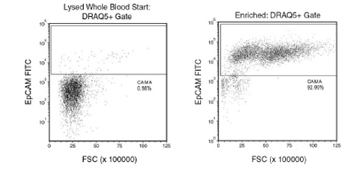CAMA cells were seeded into whole blood at a starting frequency of 0.98%. The CAMA cell (EpCAM+) content of the enriched fraction is 92.02% with a 3.8 log depletion of CD45+ cells