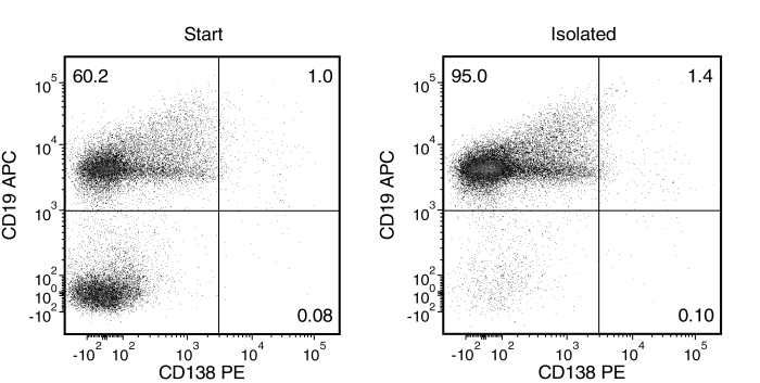 Typical EasySep™ Mouse Pan-B Cell Isolation Profile of a Non-Immunized C57BL/6 Mouse