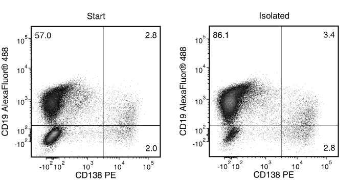 Typical EasySep™ Mouse Pan-B Cell Isolation Profile of an Immunized C57BL/6 Mouse