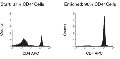 PBMC recovery from fresh whole blood using SepMate™-50 versus standard density gradient centrifugation. Graph also shows PBMC recovery from a 48 hour-old sample using SepMate™. n in each group = 7