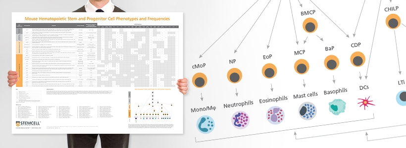 Wallchart: Mouse Immune Cytokines Infographic Poster