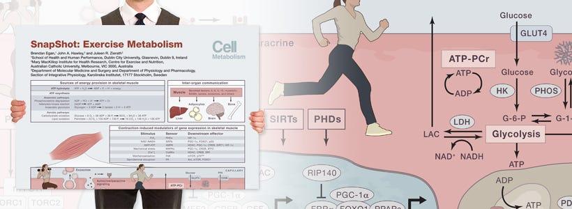 """SnapShot: Exercise Metabolism"" Wallchart"