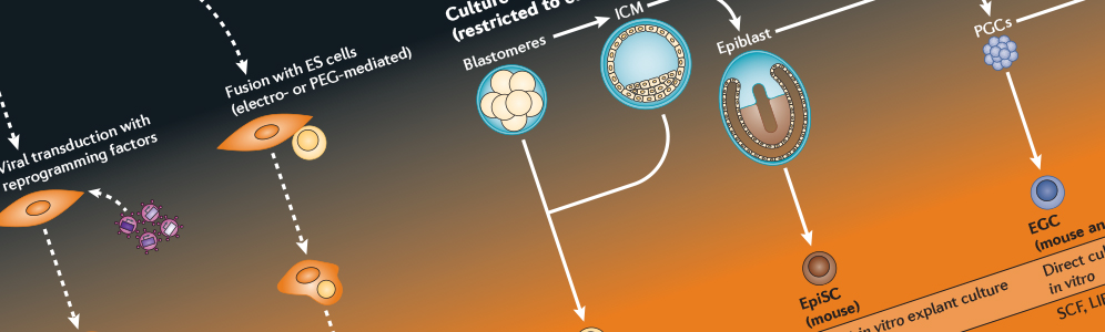iPS Cell Generation Wallchart