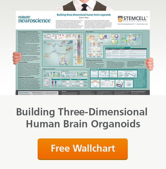 Request a free wallchart copy of 'Building Three-Dimensional Human Brain Organoids'