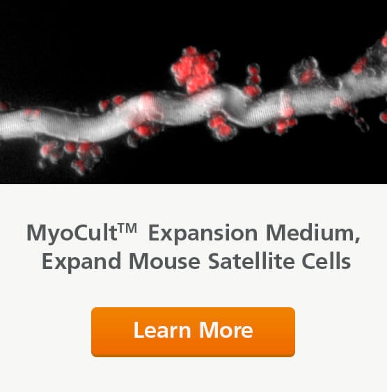 Use MyoCult Expansion Medium to expand mouse satellite cells.