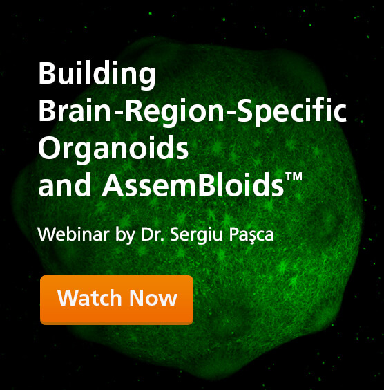 Building Brain Organoids and AssemBloids™ to Study Human Development and Disease