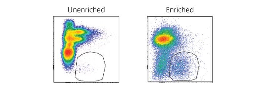 Enrichment of innate lymphoid cells