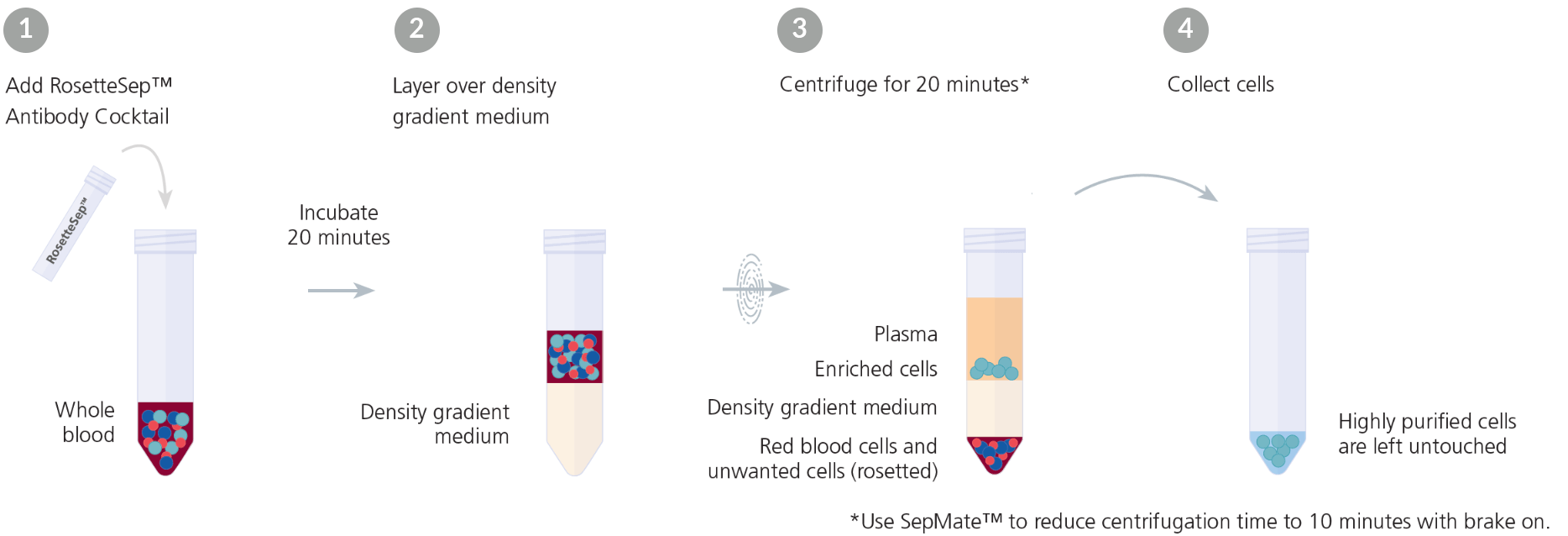 Typical RosetteSep™ Cell Separation Protocol