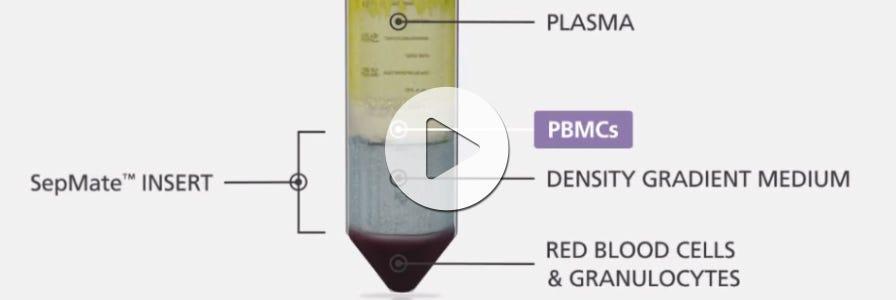 PBMC isolation using SepMate™ tubes