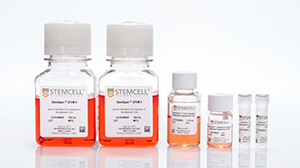 StemSpan™ Cell Culture Media: Generate T and NK cells from human CD34+ cells in stroma-free conditions.